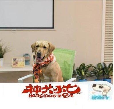 湖南卫视《神犬小七第二季》7月26日清凉来袭!